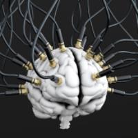 تماشای فعالیت سلول های مغز و اعصاب