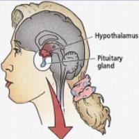 تاثیر غدد هیپوفیز و هیپوتالاموس بر عملکرد تخمدان